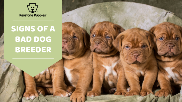 good vs bad dog breeders