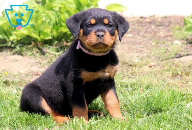 Nelly Rottie 1-001