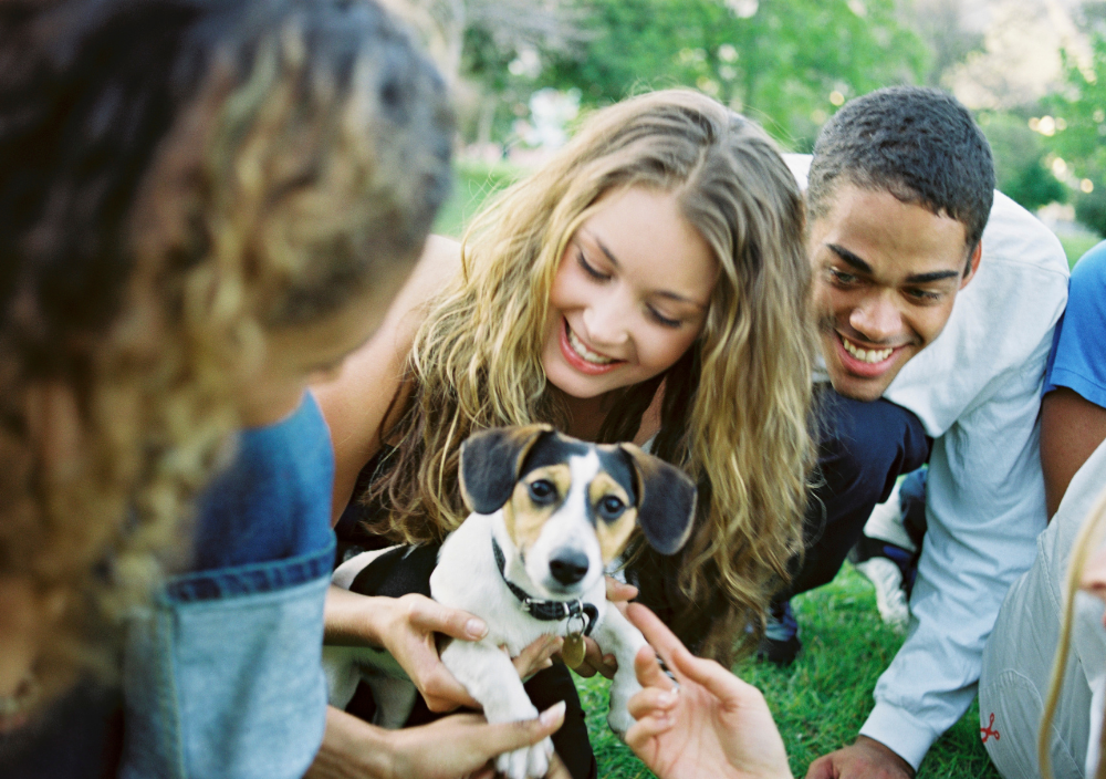 Puppy getting socialized with humans