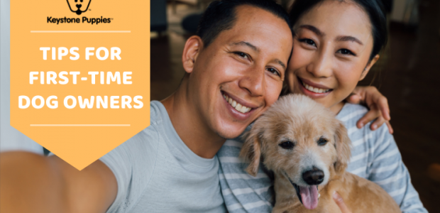 8 First Time Puppy Owner Tips for More Smiles & Less Stress