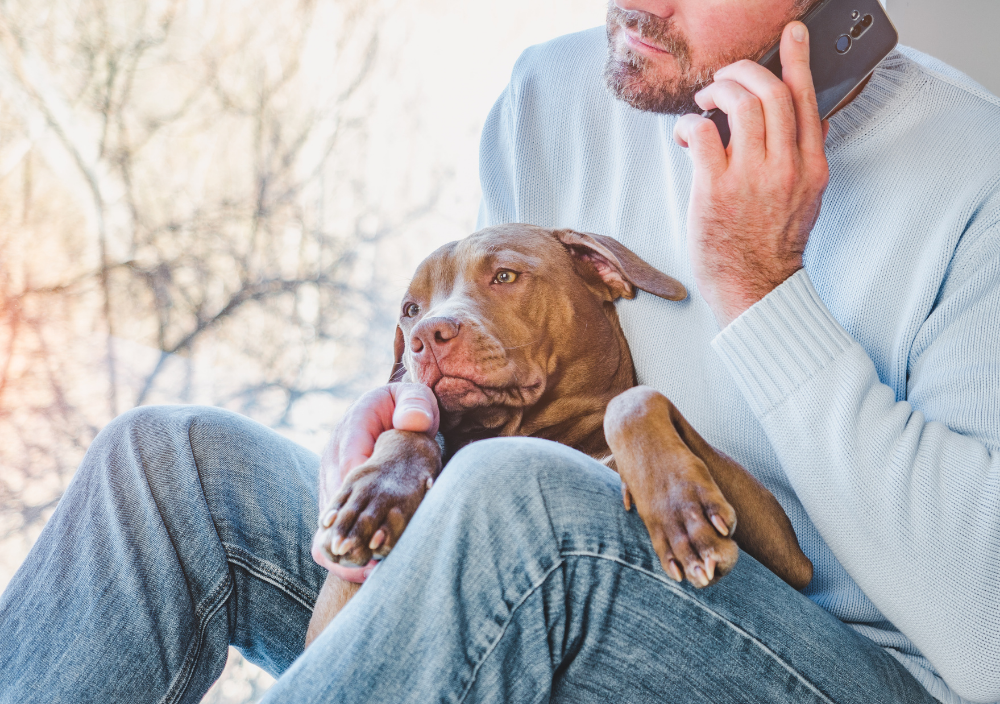Puppy and owner with telephone