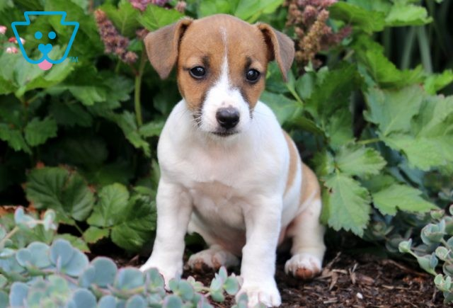 Betty Jack Russell