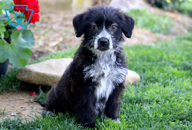 Lucky Poodle Mix
