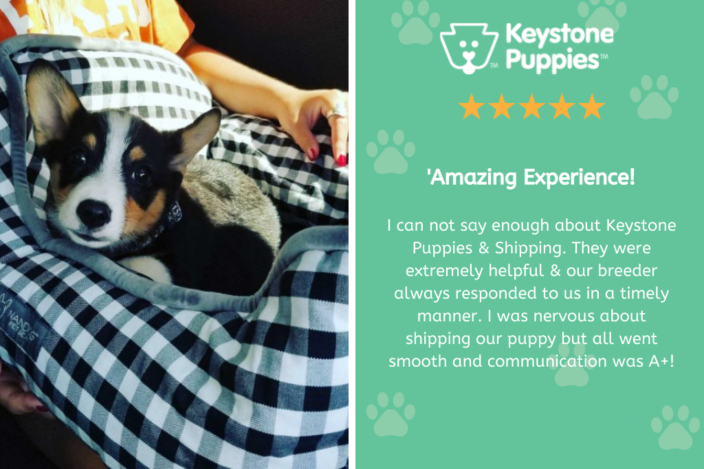 Review of PA dog breeder at Keystone Puppies