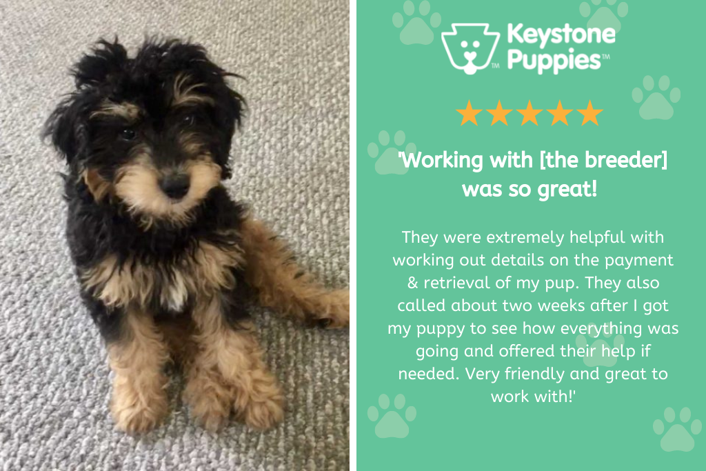 Review for responsible dog breeder from PA
