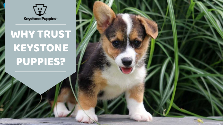 Tips for finding a responsible dog breeder in PA