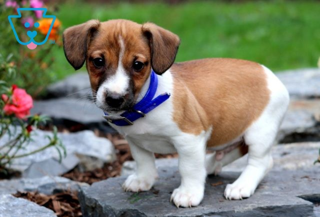 Captain Jack Russell2