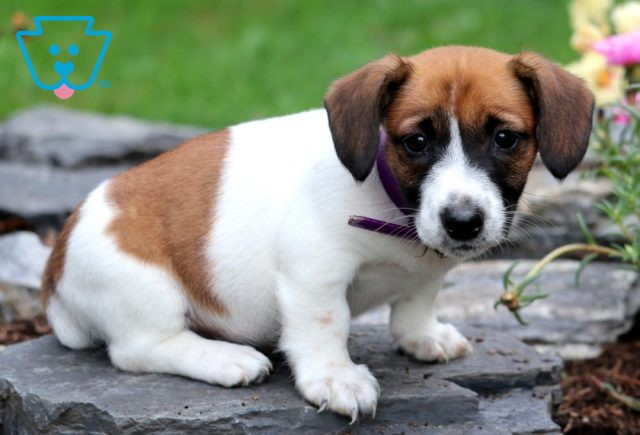Carrie Jack Russell