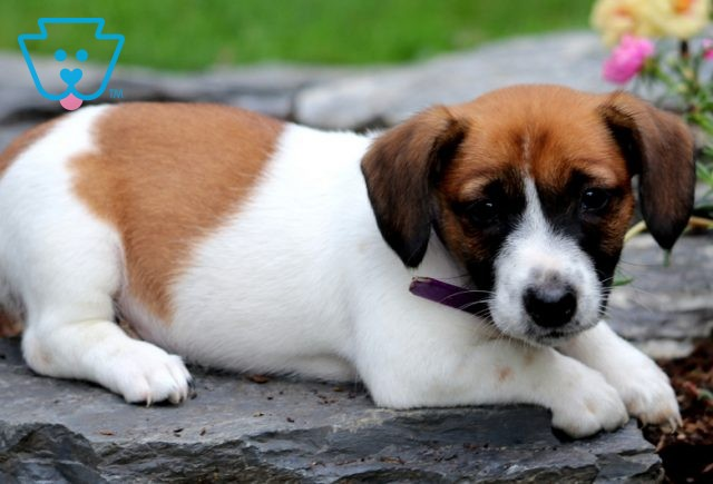 Carrie Jack Russell2